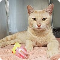 Adopt A Pet :: Cinnamon - Umatilla, FL