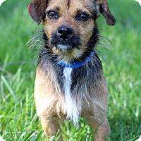 Adopt A Pet :: Brandon - Waldorf, MD