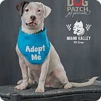Adopt A Pet :: Jeb - Dayton, OH