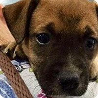 Adopt A Pet :: Kapow - Barnegat, NJ