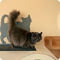 Adopt A Pet :: Leyla - Kingston, WA