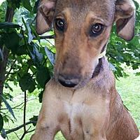 Adopt A Pet :: Kaiya - Medora, IN