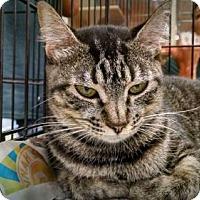 Adopt A Pet :: *Sylvi - Pembroke, GA