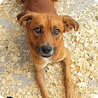 Adopt A Pet :: Runner - Leslie, AR