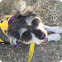 Adopt A Pet :: Bentley - Greenwood, LA