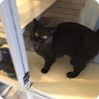 Adopt A Pet :: ZEPHA - Elk Grove, CA