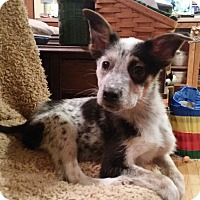 Adopt A Pet :: Dopey - New Oxford, PA