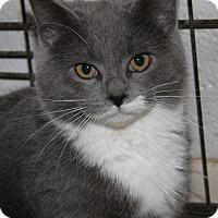 Adopt A Pet :: Annie - Marietta, OH