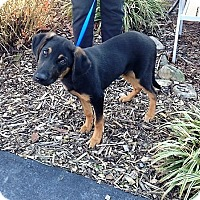 Adopt A Pet :: Branik - Portland, ME