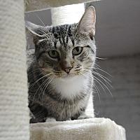 Adopt A Pet :: Starlet - Brooklyn, NY