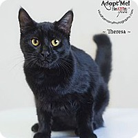Adopt A Pet :: Theresa - Phoenix, AZ