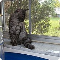 Adopt A Pet :: Twilight - Ocala, FL