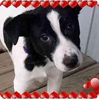 Adopt A Pet :: Spot - Staunton, VA