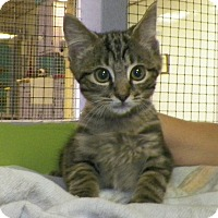 Adopt A Pet :: Zed - Dover, OH