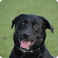 Adopt A Pet :: Bronco - Meridian, ID
