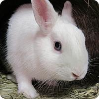 Adopt A Pet :: Bug a Boo - Newport, DE