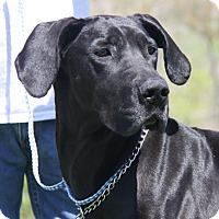 Adopt A Pet :: Isabelle - Baden, PA