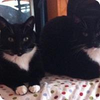 Adopt A Pet :: Cody and Jake - Sacramento, CA