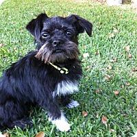 Adopt A Pet :: Bella - San Dimas, CA