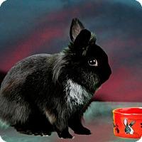Adopt A Pet :: Piedmont - Marietta, GA