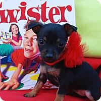 Adopt A Pet :: Twister - Irvine, CA