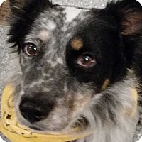 Adopt A Pet :: George - New Update 4/31! - Midwest (WI, IL, MN), WI