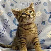 Adopt A Pet :: Yujin - Addison, IL
