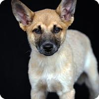 Adopt A Pet :: Finn - SAN PEDRO, CA