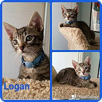 Adopt A Pet :: Logan - Arlington/Ft Worth, TX