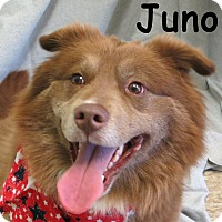 Adopt A Pet :: Juno - Warren, PA
