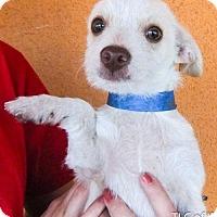 Adopt A Pet :: 20160709C - Moreno Valley, CA