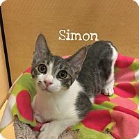Adopt A Pet :: Simon - Foothill Ranch, CA