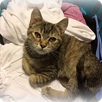 Adopt A Pet :: Sophia - Millersville, MD
