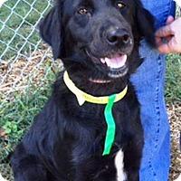 Adopt A Pet :: River - Rexford, NY