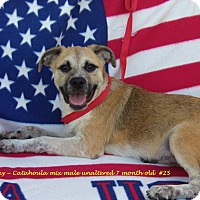 Catahoula Leopard Dog Mix Puppy for adoption in Jacksonville, Texas - Spanky