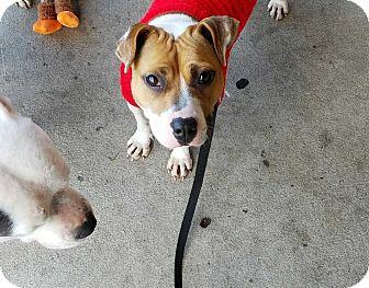 Boxer Mix Dog for adoption in Summerville, South Carolina - Mi Mi
