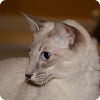 Adopt A Pet :: Blu' Bayou - Glendale, AZ