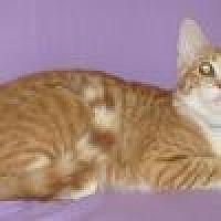 Adopt A Pet :: Alfi - Powell, OH