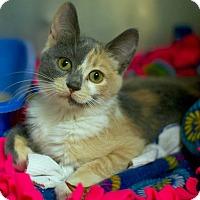 Adopt A Pet :: Fiji - Troy, MI