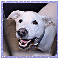 Adopt A Pet :: Hunter - San Jacinto, CA