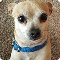 Adopt A Pet :: Memphis Blaze - Seattle, WA