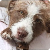 Adopt A Pet :: Bailey! - san diego, CA