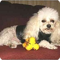 Adopt A Pet :: Maurice - Mooy, AL