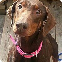 Adopt A Pet :: Heather*ADOPTED!* - Chicago, IL