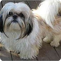 Adopt A Pet :: Timothy - Dayton, OH