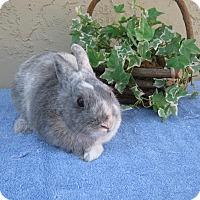 Adopt A Pet :: Brawley - Bonita, CA