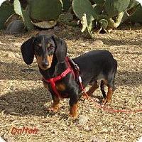 Adopt A Pet :: Dalton - Chandler, AZ
