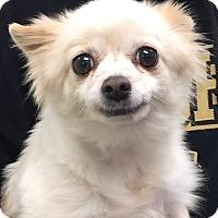 Adopt A Pet :: Martina - geneva, FL