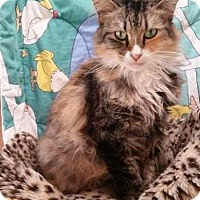 Adopt A Pet :: Susie Emerald Eyes - Davis, CA