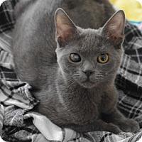Adopt A Pet :: Olive - Brockton, MA
